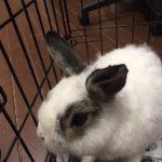 10274 rabbit